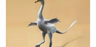 New dinosaur looks like odd mix of duck, croc, ostrich, swan