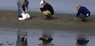 Migrating birds create flu bonanza for scientists to study