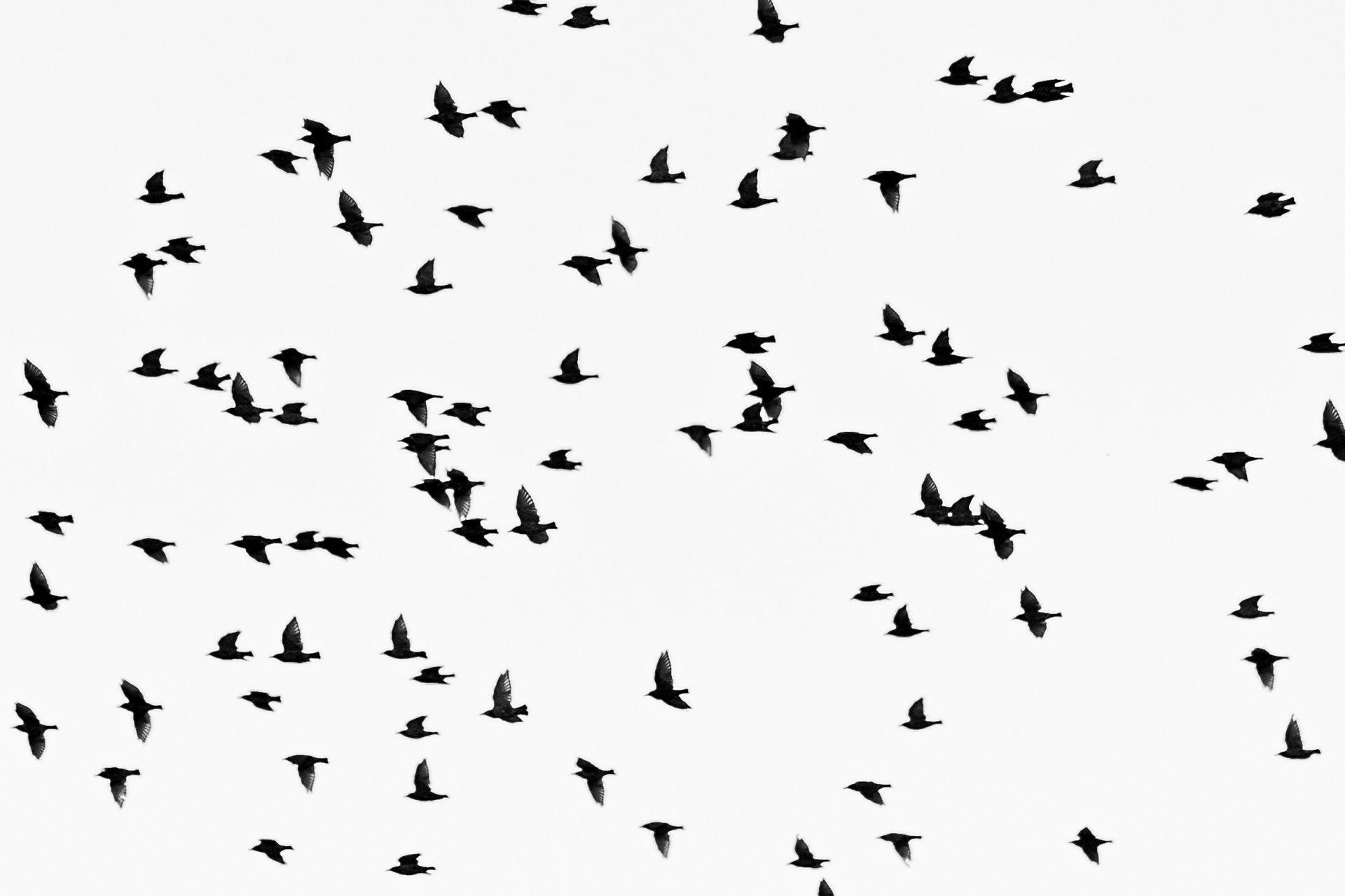 Birdie Bollywood (II)